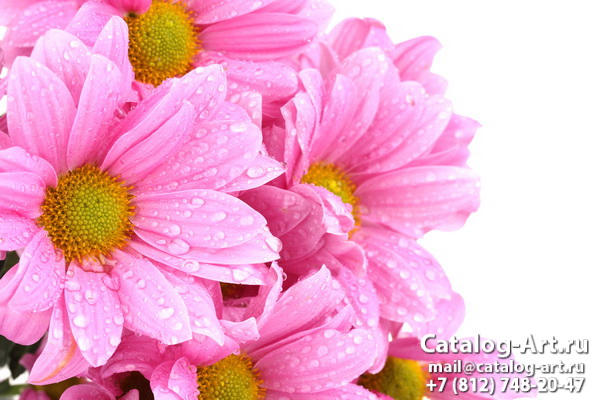 Pink flowers 55