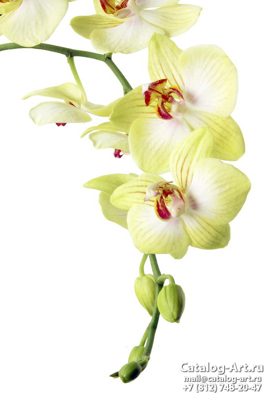 Yellow orchids 11