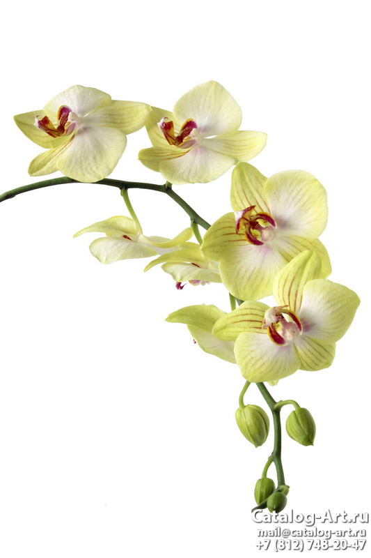 Yellow orchids 12