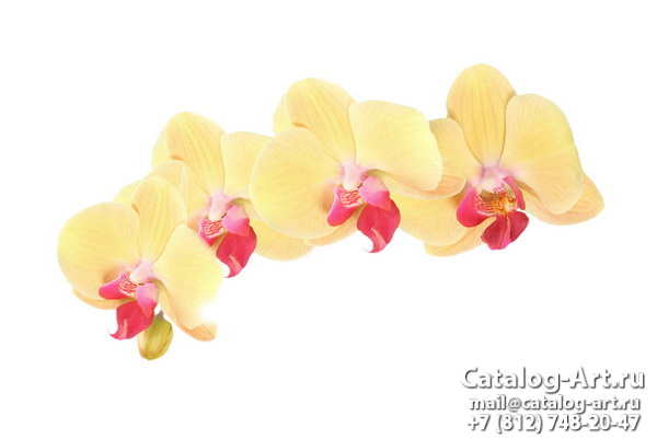 Yellow orchids 14