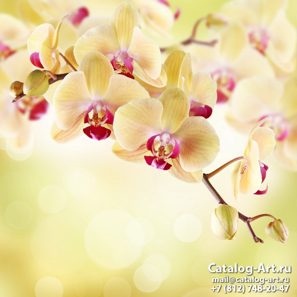 Yellow orchids 15