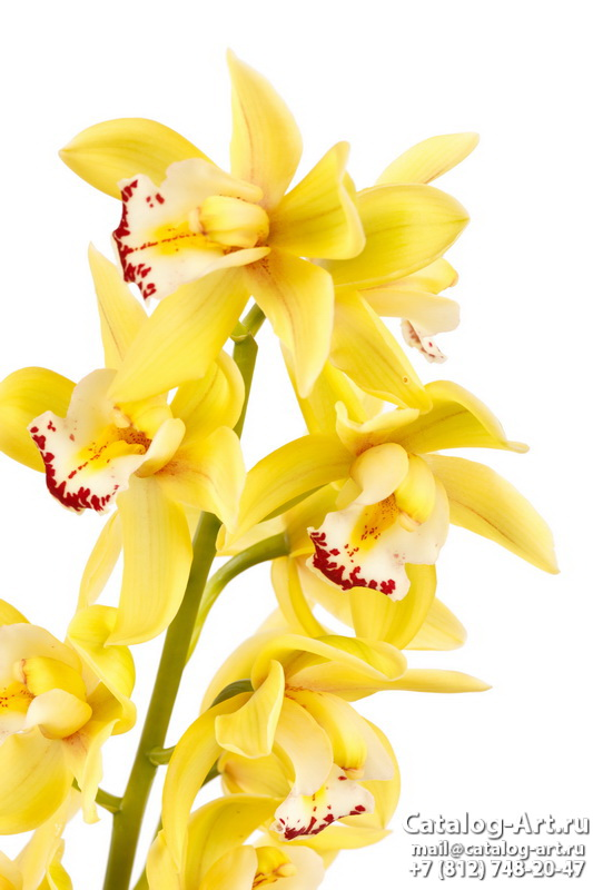 Yellow orchids 16