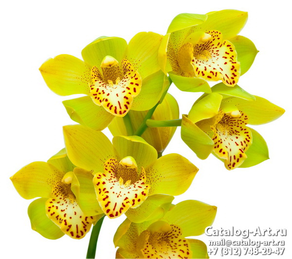 Yellow orchids 21