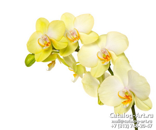 Yellow orchids 23