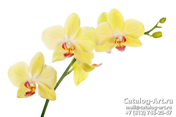 Yellow orchids 25