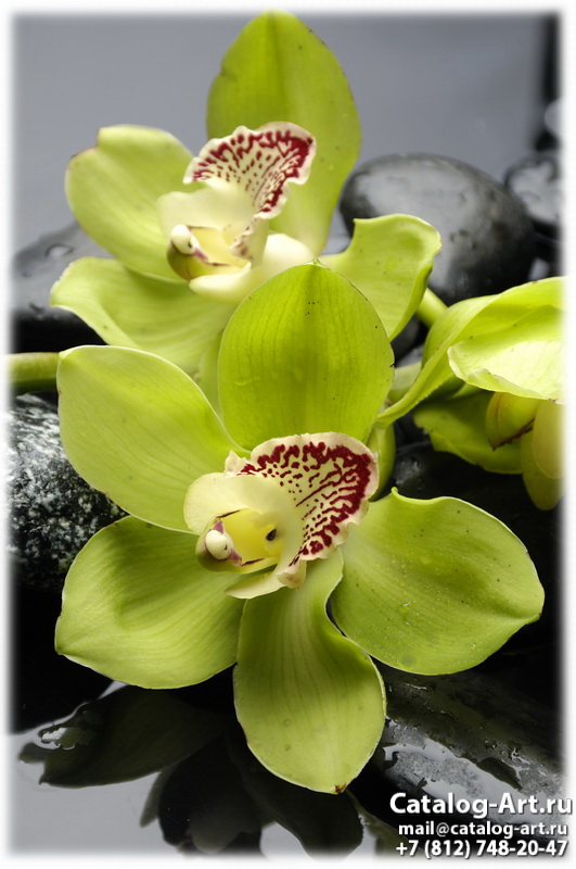 Yellow orchids 27