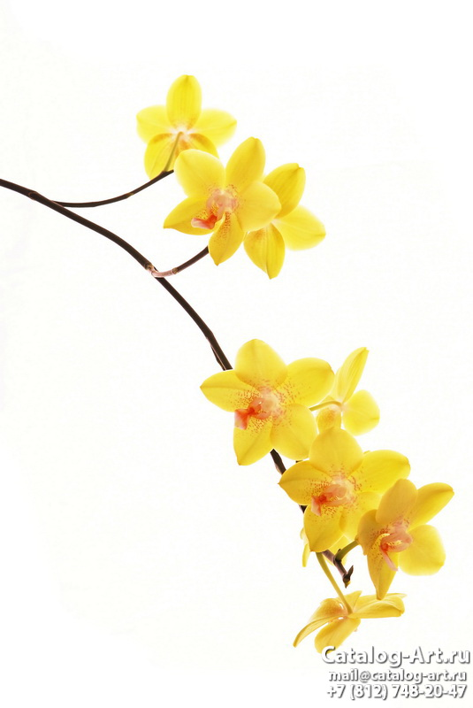 Yellow orchids 4