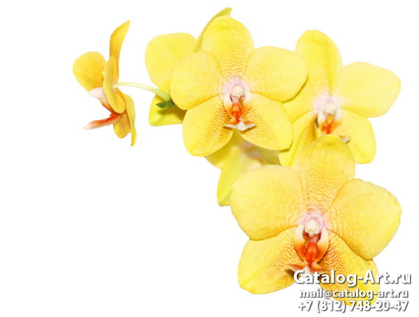 Yellow orchids 5