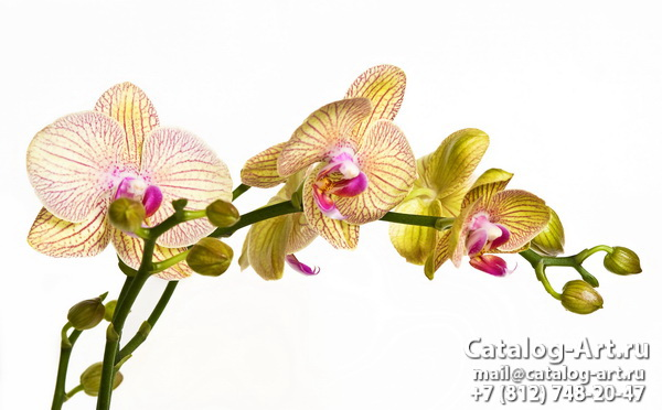Yellow orchids 6
