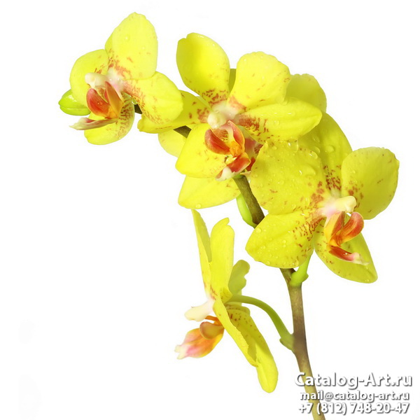 Yellow orchids 8