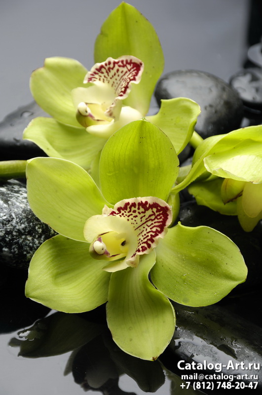 Yellow orchids 9